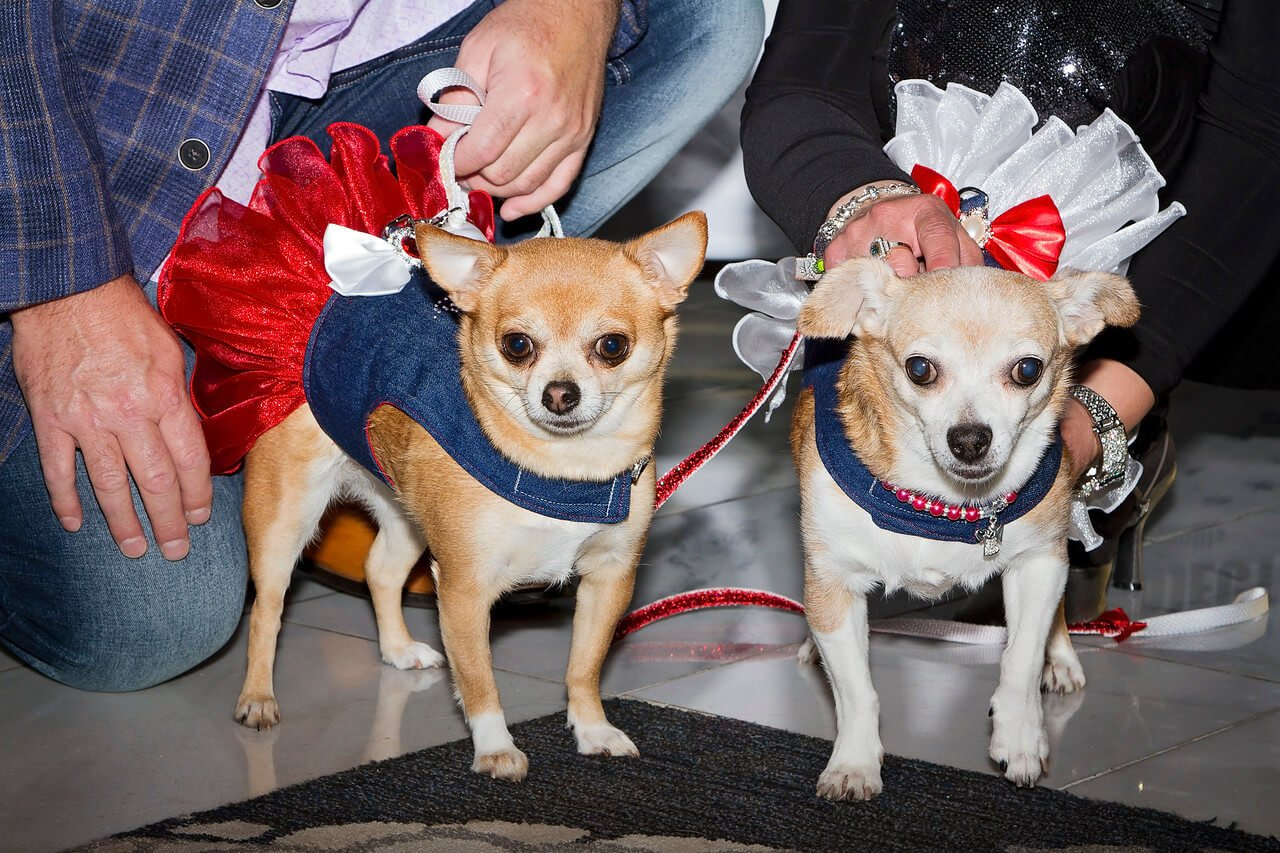 Puppy Mill Project Event – May 2018 - The NR Group